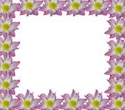 Lotus rosa färger i isolerad vit bakgrund Fotografering för Bildbyråer