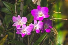 Lotus rosado hermoso, planta de agua con la reflexión en una charca Foto de archivo libre de regalías