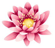 Lotus rose Photos stock