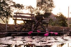 Lotus rose dans un étang Photographie stock libre de droits