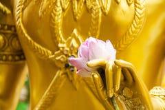 Lotus rose sur une main de statue d'or photographie stock