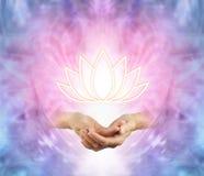 Lotus sagrado imagens de stock royalty free