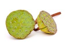 Lotus-Samen stockbilder