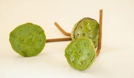 Lotus-Samen auf weißem Hintergrund Stockfotografie