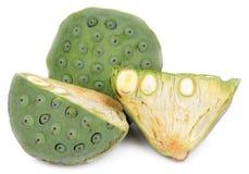 Lotus-Samenisolat Weißhintergrund lizenzfreie stockbilder