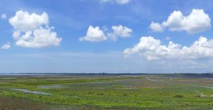 Lotus sea. Beautiful clouds on blue sky over lotus sea at songkhla lake, southern Thailand, shallow focus Royalty Free Stock Image