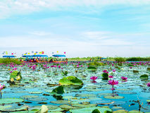 Lotus sea and boat Stock Photo