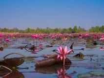 Lotus Sea rossa Fotografia Stock