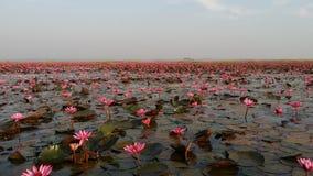 Lotus Sea vermelha Imagens de Stock Royalty Free