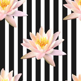 Lotus seamless pattern on stripe background. Stock Images