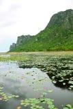 Der lotus See. Lizenzfreie Stockfotografie