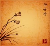 Lotus seed heads, leaves of grass and little snail on vintage background. Traditional oriental ink painting sumi-e, u Stock Images