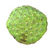 Lotus Seed med vit bakgrund arkivfoto