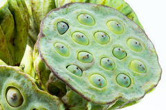 Lotus seed pod close up Stock Image