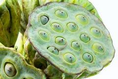 Lotus seed pod close up Stock Image