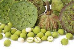 Free Lotus Seed Pods Royalty Free Stock Images - 44321539
