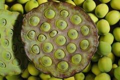 Free Lotus Seed Pods Stock Image - 44340061