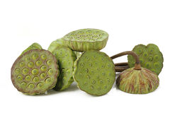 Free Lotus Seed Pods Royalty Free Stock Images - 44383929