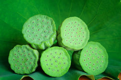 Lotus seedpod Stock Images