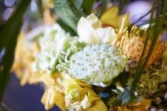 Lotus seedpod flowers plant bust table setting Royalty Free Stock Photos