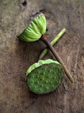 Lotus seeds on old wood Stock Images