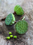 Lotus seeds on old wood Stock Image