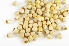 Lotus seeds on white Stock Photos
