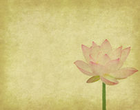 Lotus with set of abstract painted Stock Images
