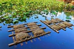 Lotus in Shinobazu-Teich Stockbilder