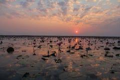 Lotus solnedgång Arkivfoto