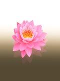 Lotus su bianco per annerire fondo Fotografia Stock Libera da Diritti