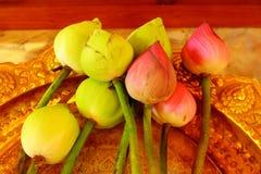 Lotus sul vassoio dell'oro Fotografia Stock Libera da Diritti