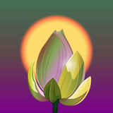 Lotus and sunrise. The lotus flower on the background of the rising sun. Vector Illustration Royalty Free Stock Images