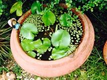 Lotus sur l'eau Photographie stock