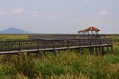 Lotus Swamp in Khao Sam Roi Yot National Park Royalty Free Stock Photos