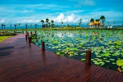 Lotus-Teich Lizenzfreies Stockfoto