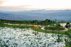 Lotus-Teich in der Dämmerung Lizenzfreie Stockfotografie