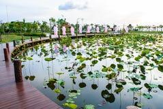 Lotus-Teich mit braunen Promenaden Stockfoto