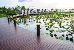 Lotus-Teich mit braunen Promenaden Stockfotografie