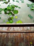 Lotus-Teich und -plattform Stockbild