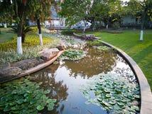 Lotus-Teich unter Sonnenschein Lizenzfreies Stockbild