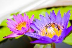Lotus thaïlandais en Wat Pho, Bangkok, Thaïlande Photo libre de droits