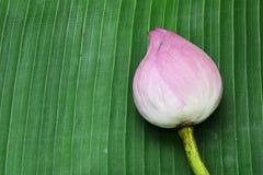 Lotus on Thai floor Stock Image