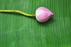 Lotus on Thai floor Royalty Free Stock Photo