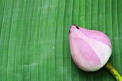 Lotus on Thai floor Stock Photography