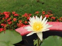 Lotus in Thailand Lizenzfreie Stockbilder
