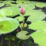 Lotus und Blumen Stockfoto