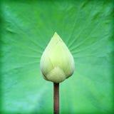 Lotus und Lotosblatt Stockfotografie