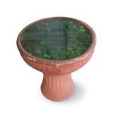 Lotus vattenväxt Royaltyfri Fotografi