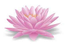 Lotus. Vector illustration of lotus on whote background royalty free illustration